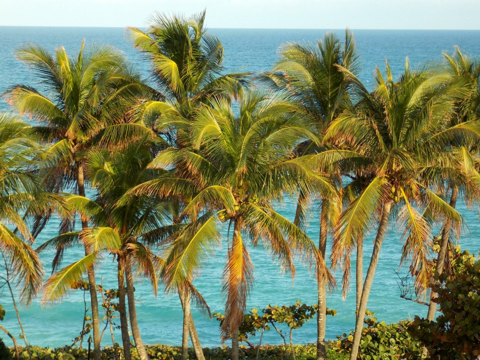 Palm Trees and Ocean View